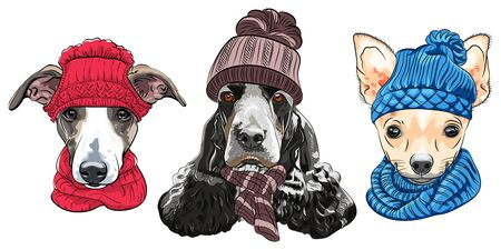 Set of hipster dogs in warm winter knitted hats and scarves. Italian Greyhound, English Cocker Spaniel and Chihuahua. Illustration
