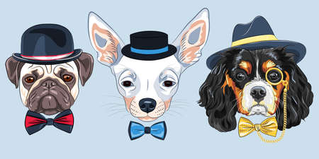 Set of hipster dogs in hats and bow ties. King Charles Spaniel with gold monocle, Chihuahua and fawn Pug