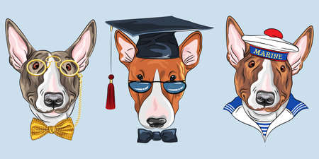 Set of Bullterrier dogs, graduated dog in glasses and bow tie, gentelman in gold pince-nez and bow tie and sailor in peakless cap and striped vest Stock Illustratie