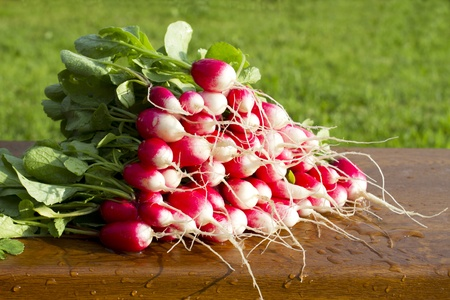 Red radish with green vegetable tops on a wooden bench,  background green grass.