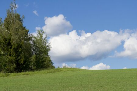 blue sky, green meadow and some trees Stock Photo