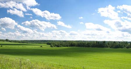 blue sky, green meadow