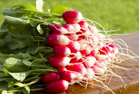 Red radish with green vegetable tops on a wooden bench,  background green grass