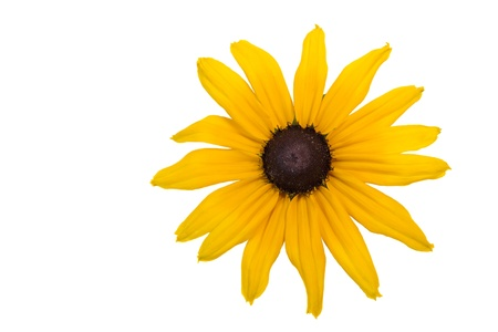 Yellow flower closeup isolated on white background