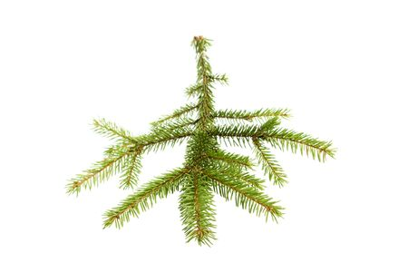 green fir tree branch on the white Stock Photo