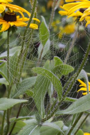 spider web on yellow flower Stock Photo