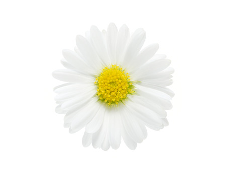 Beauty camomile isolated on white background Stock Photo