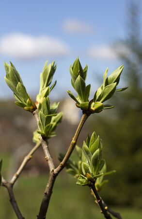 Branch with a bud on a grey background