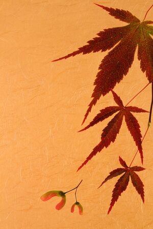 Japanese Maple Leaf Border. Stock Photo