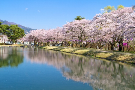 Cherry blossoms reflecting in the lake.