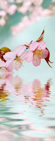 Cherry blossoms reflected in the lake.