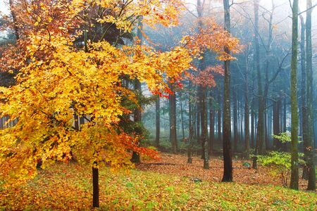 Mysterious forest in autumn.