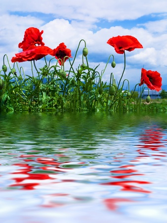 Blooming poppies reflected in the lake. Stock Photo