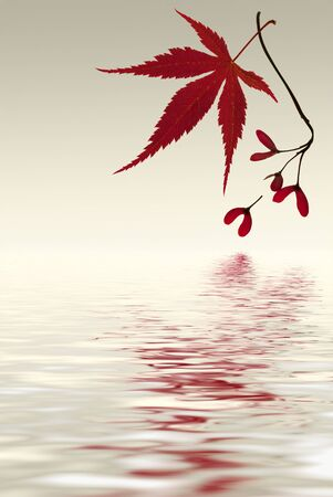 Japanese maple leaf with reflection in the lake.  Stock Photo