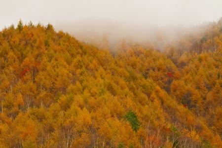Autumn in mountains.  Morning fog. Banco de Imagens