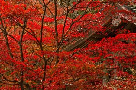 ponte giapponese: Tempio buddista in autunno.