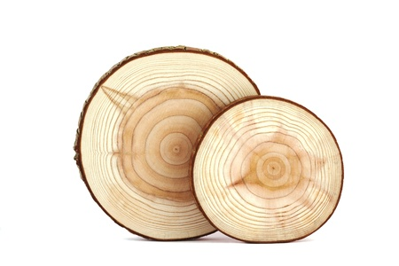 Cross section of tree trunk isolated on white.
