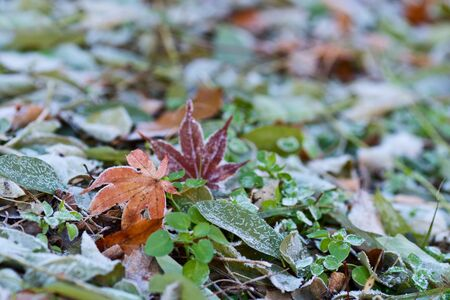 Fosty leaves on the ground  Stock Photo