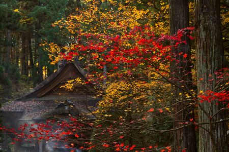 Buddhist Temple in the fall  photo
