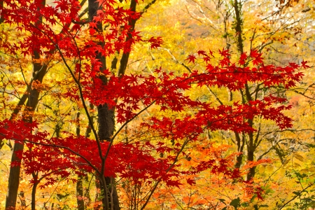 Autumn tree with foliage
