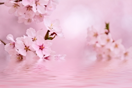 Cherry blossoms reflecting in the lake Imagens - 25525856