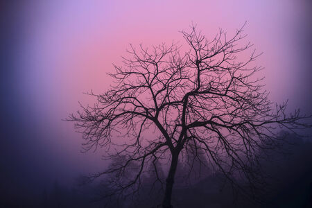 Lonely tree in the misty autumn forest.