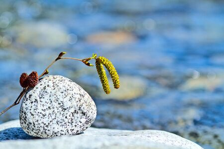 Twig in rapid stream of a mountain river. Stock Photo