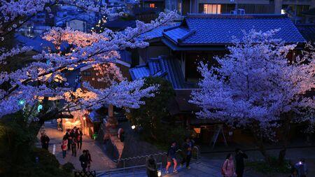 arbol de cerezo: Las ramas de los cerezos en flor contra un fondo de la noche de Kyoto. Foto de archivo