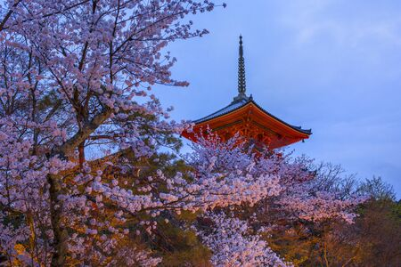 The branches of cherry blossoms against a background of the evening Kyoto.