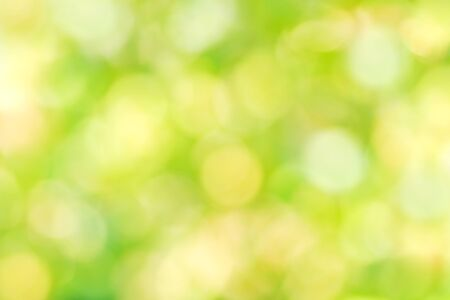 Natural background in green colors, the bokeh effect.