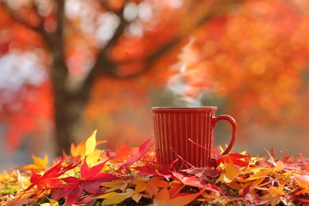 Hot steaming cup of coffee  tea on autumn leaves with beautiful tree on the background. (Place for text, shallow DOF).