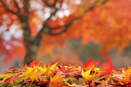 Blurred colorful background with autumn leaves in the foreground. Stock Photo