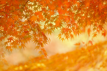 Blurred colorful background with autumn leaves. Banco de Imagens