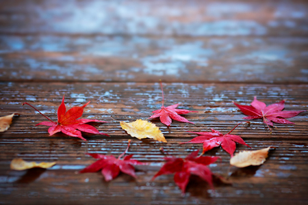 Autumn maple leaves on a wooden background.