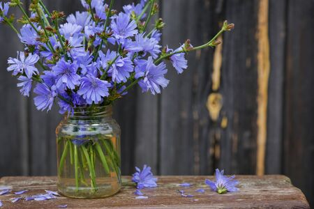 Chicory flowers in glass container on old wooden table.