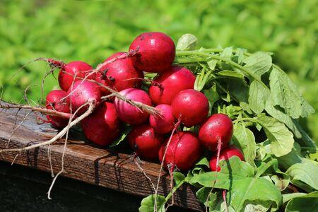 Fresh bunch of radish on wooden table