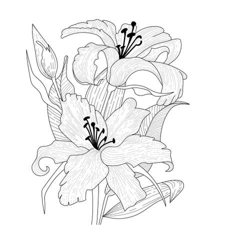 Flowers graphic. Two blooming lilies with a bud and leaves. Vector coloring book pages. Hand drawn illustration. Monochrome floral background wallpaper.