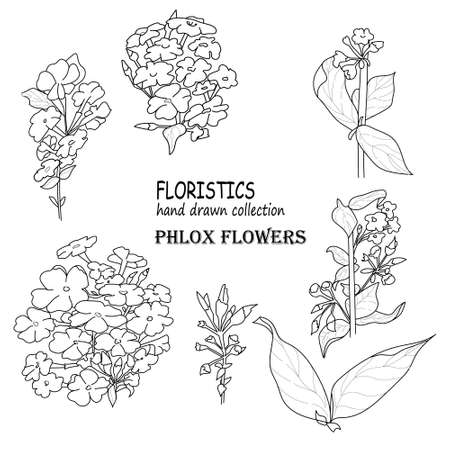 Set of flowers phlox and leaves. Botanical illustration. Hand drawn vector drawing. Line art, pen on a white background. Decorative elements for spring and summer design