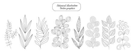 Botanical set, hand drawn. Tree and herbal branches with different leaves and berries. Natural graphic elements for your design of, greeting cards, gift packaging. decoration of a blog or website page