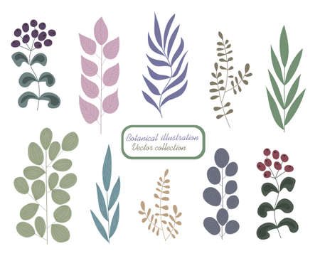 Botanical color set. Branches of trees and herbs with different leaves and berries. Natural graphic elements for your design Иллюстрация