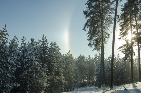Rainbow in the winter pine forest Banque d'images