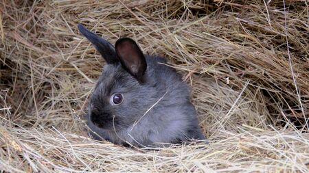 little rabbit in the hay