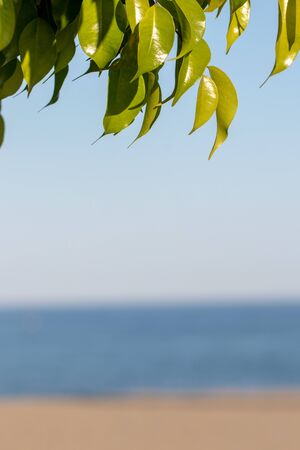 Beach summer background. Image with focus on nice leaves of orange tree against blurred sandy beach at Costa del Sol, Spain. Template with large space for vacation advertising.