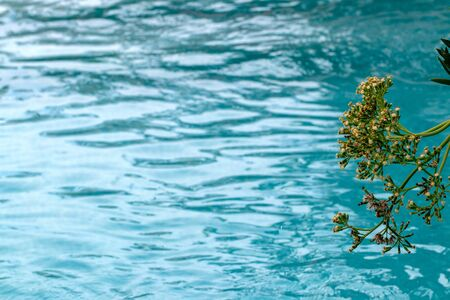 Close-up of a flowering green plant at the Spanish Mediterranean against blurred turquoise blue water. Beautiful background for card or for travel advertising.