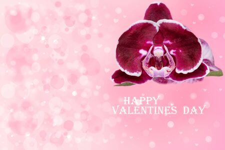 Valentines day card. Decorative greeting card with a purple orchid and with the text Happy Valentines day on an abstract delicate light pink background with hearts and bokeh circles. Space.