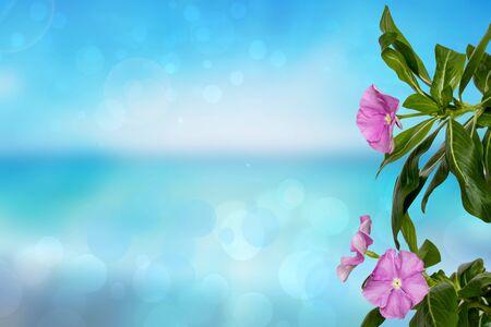Grußkartenvorlage. Nahaufnahme der schönen rosa tropischen Blume über einem abstrakten blauen Ozeanhintergrund. Gruß-, Einladungs- oder Valentinstags- und Hochzeitskarte. Großer Gestaltungsraum. Standard-Bild