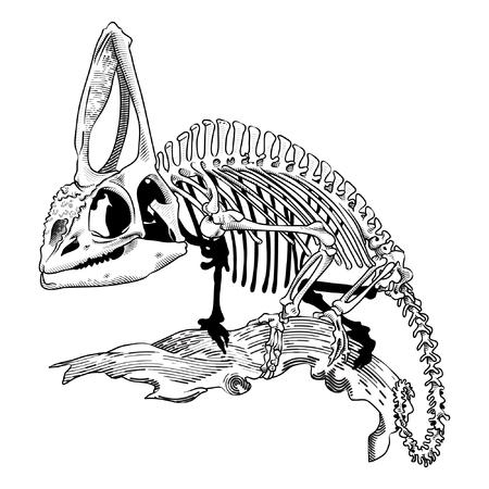 Chameleon's detailed skeleton Stock Illustratie