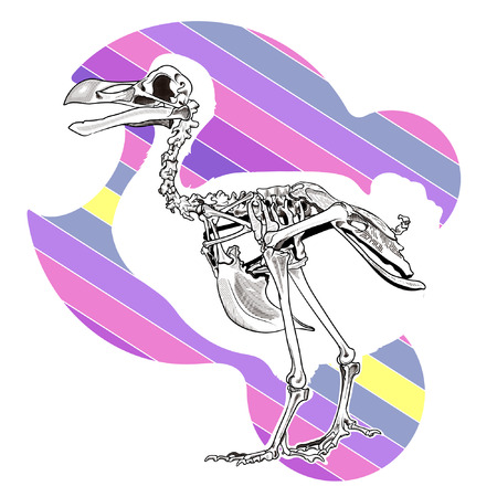 Dronts  skeleton on color background Illustration