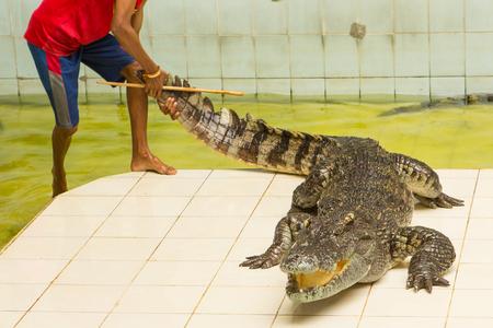 Thailand, zoo Show of crocodiles at Crocodile Farm and Zoo Stock Photo