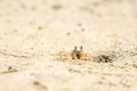 Small crabs on the beach in the sand Stock Photo